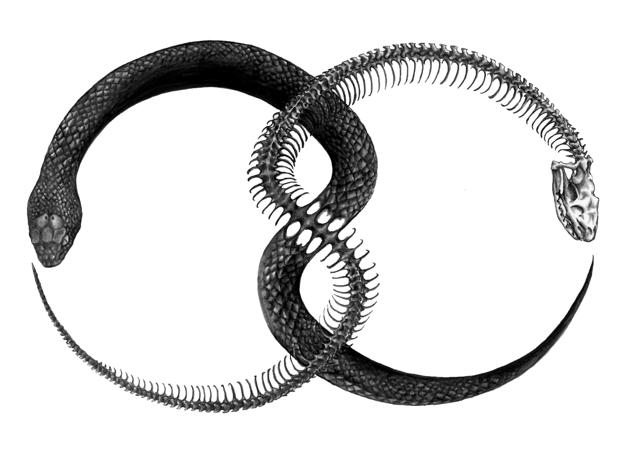 Ouroboros Png File PNG Image - Ouroboros PNG