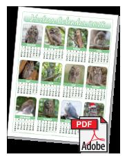 2018 Hooters Owl Calendar - North America (3 options) - Owl Calendar PNG