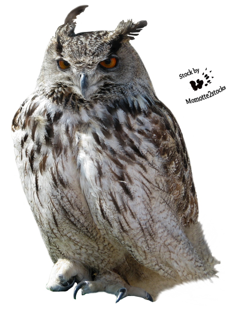 Owl - Owl HD PNG