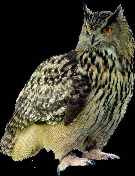 Owl, Bird, Night, Feather, Predator, Creature, Hunter - Owl HD PNG