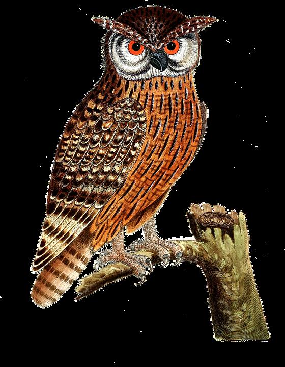 Owl, Eagle Owl, Bird, Bird Of Prey, Isolated, Vintage - Owl HD PNG