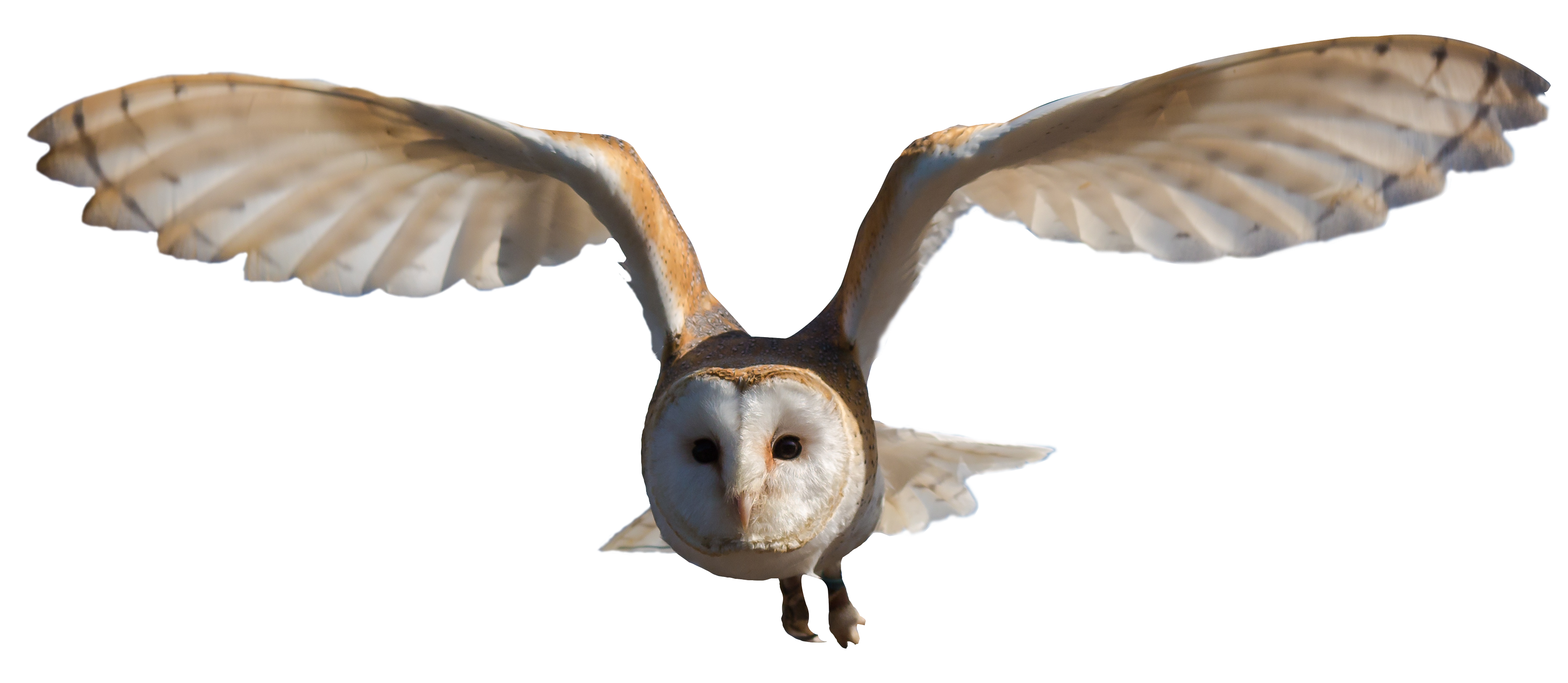 Owl PNG - 15896