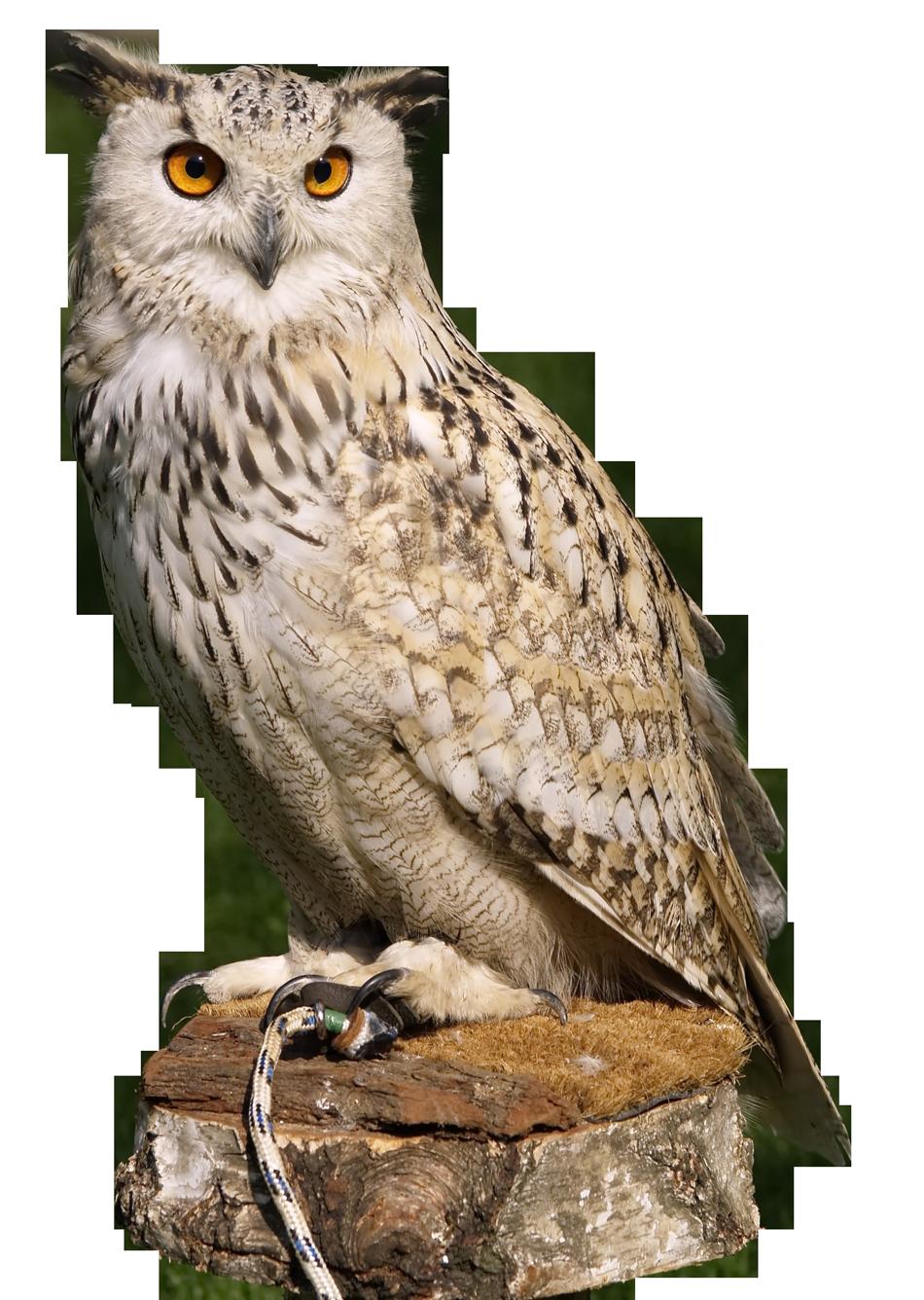 Eagle Owl PNG Transparent Image - Owl PNG