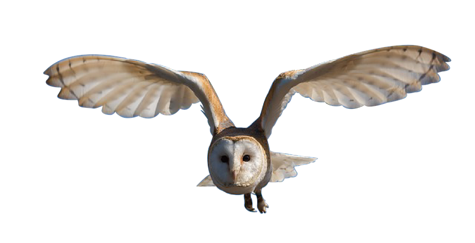 Owl, Bird, Nature, Animal, Eyes, Brown, Wild, Yellow - Owl PNG