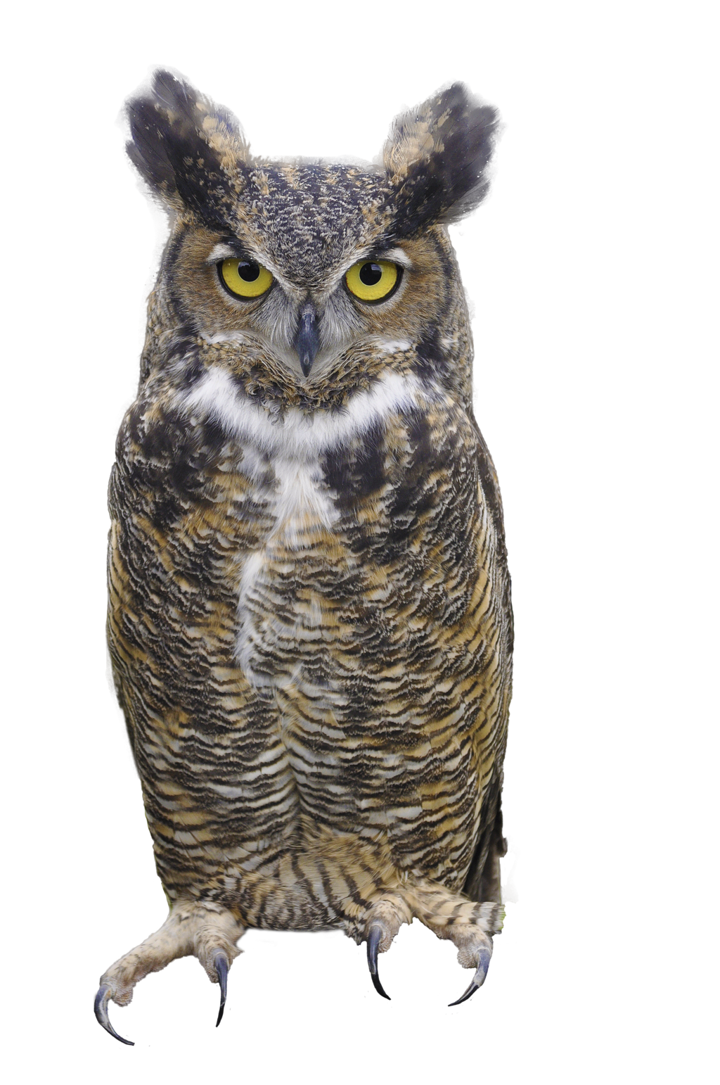 Owl PNG - 15887