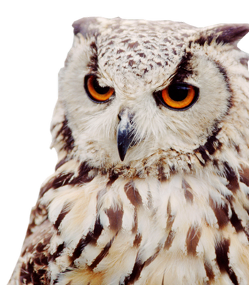 Owl PNG - 15905