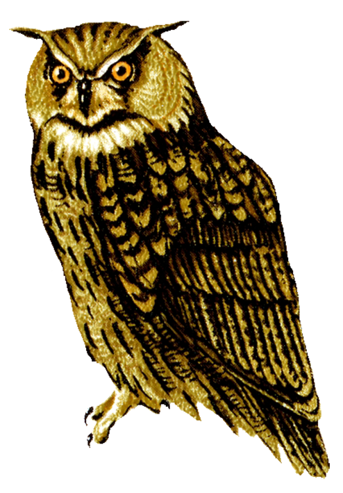 Owl PNG - 15899