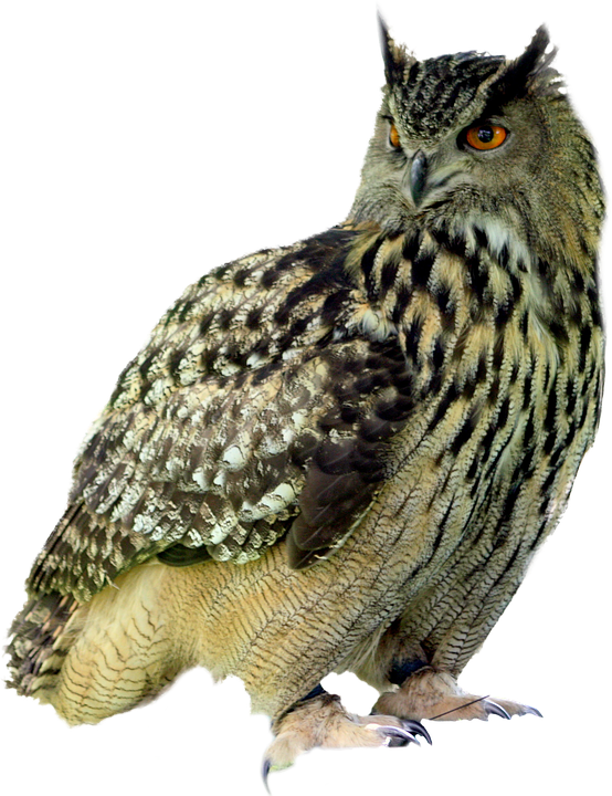 Owl PNG - 15897