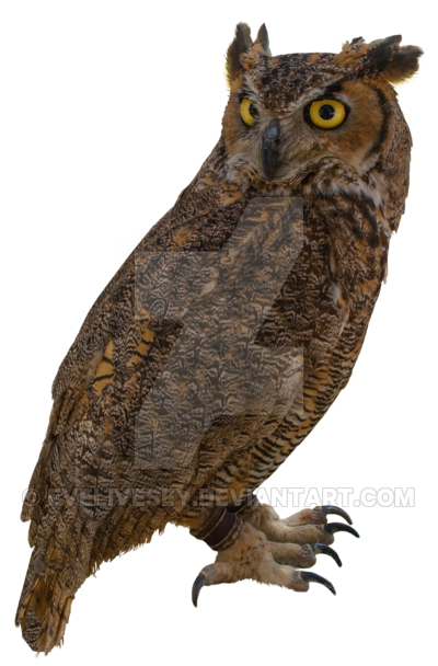Owl PNG by EveLivesey PlusPng.com  - Owl PNG