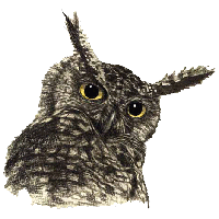Owl Png File PNG Image - Owl PNG