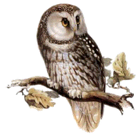 Owl PNG - 15895
