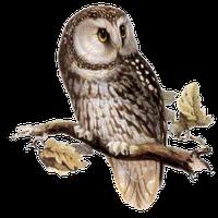 Owl Png PNG Image - Owl PNG
