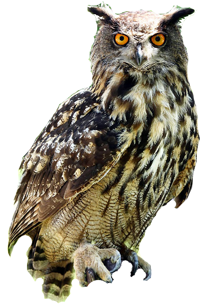 Owl PNG - 15888