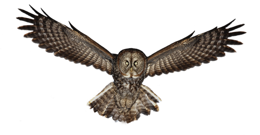 Owl PNG - 15900