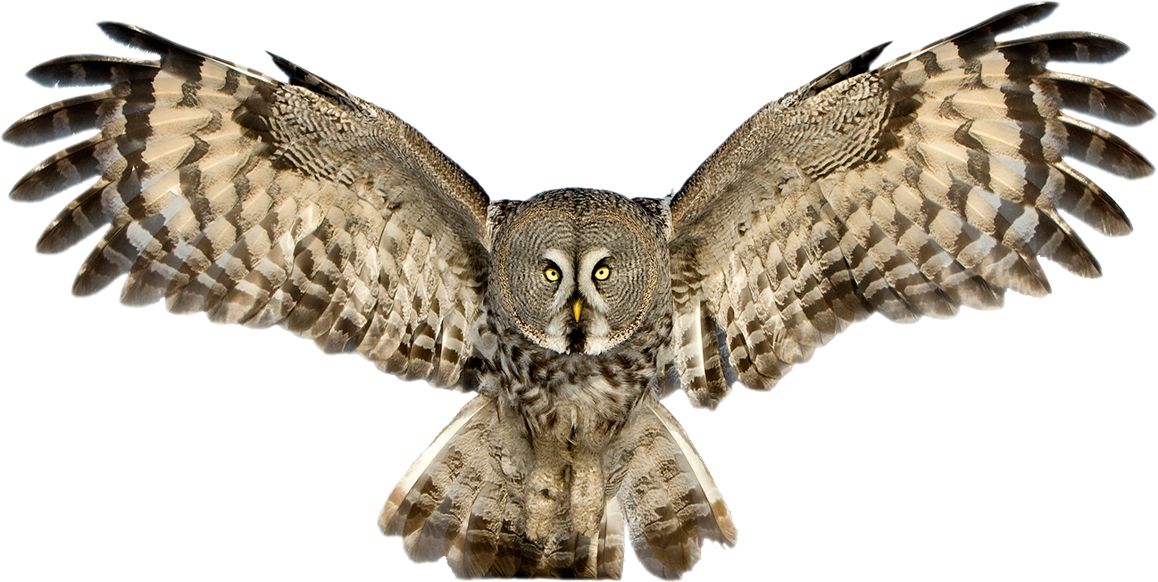 Owl PNG - 15893