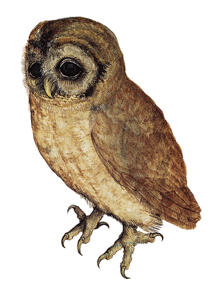 Owl PNG - 15906