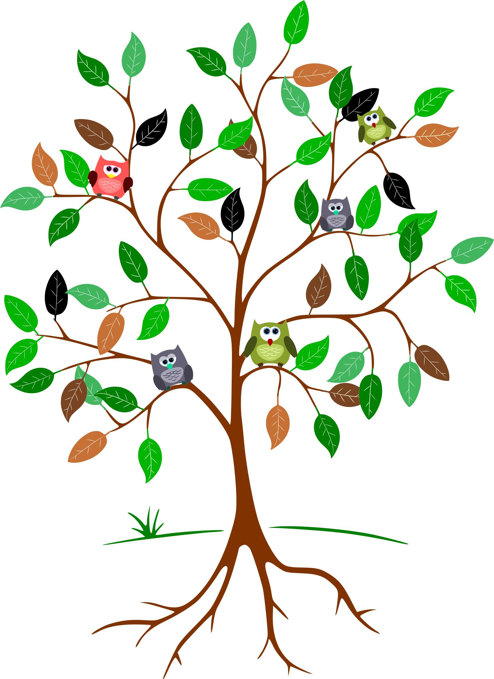 Owls In A Tree - Owls In A Tree PNG