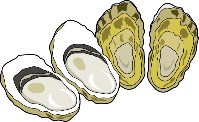 Oyster Clipart 2 - Oyster Cartoon PNG