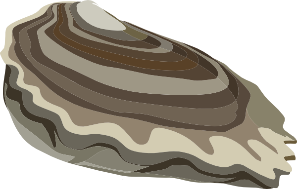 PNG: small · medium · large - Oyster Cartoon PNG