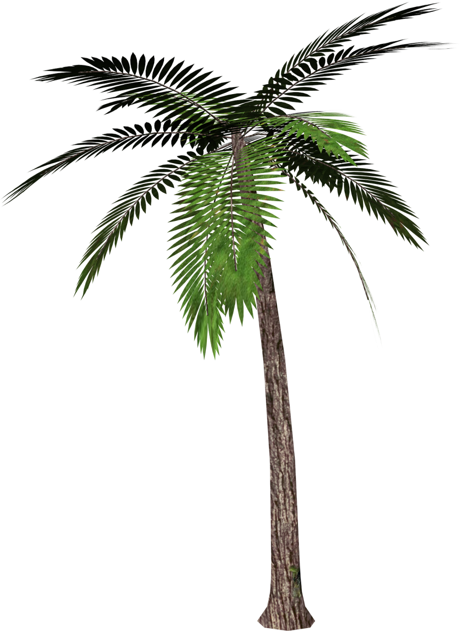 Palm Tree PNG - 10962