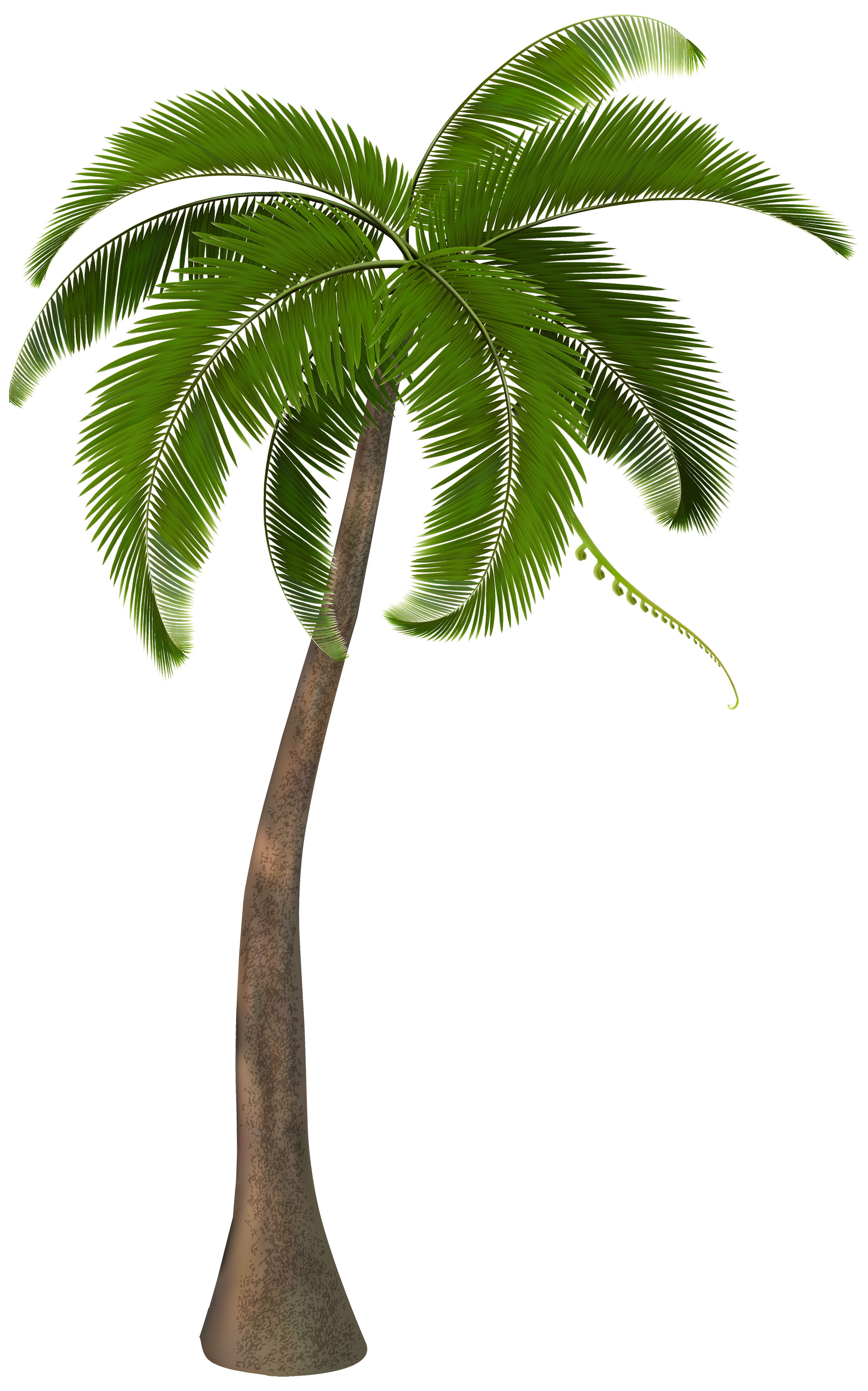 Palm Tree PNG - 10978