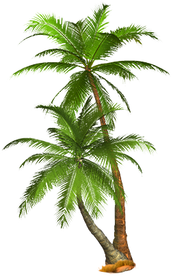 Palm Tree PNG - 10980