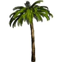 Tropical Palm Tree Png PNG Image - Palm Tree PNG