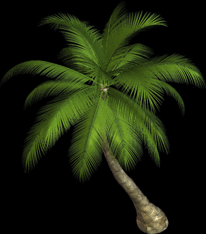 Palmtree HD PNG