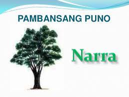 Pambansang Puno: Narra - Pambansang Sagisag Ng Pilipinas PNG