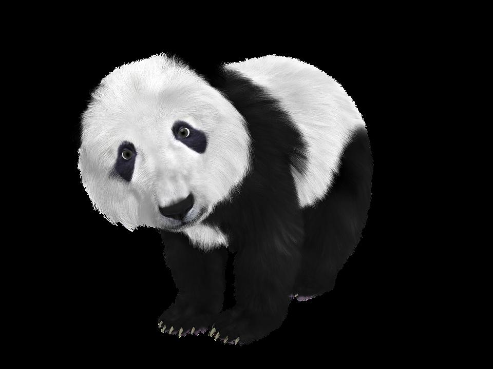 Panda HD PNG - 118907
