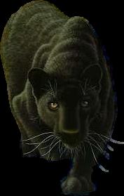 Panther PNG - 8082