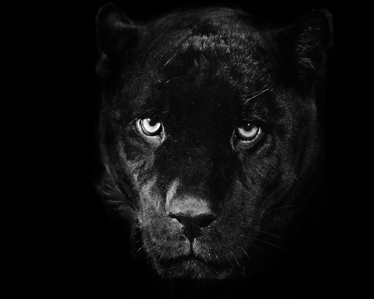 Panther PNG - 8083
