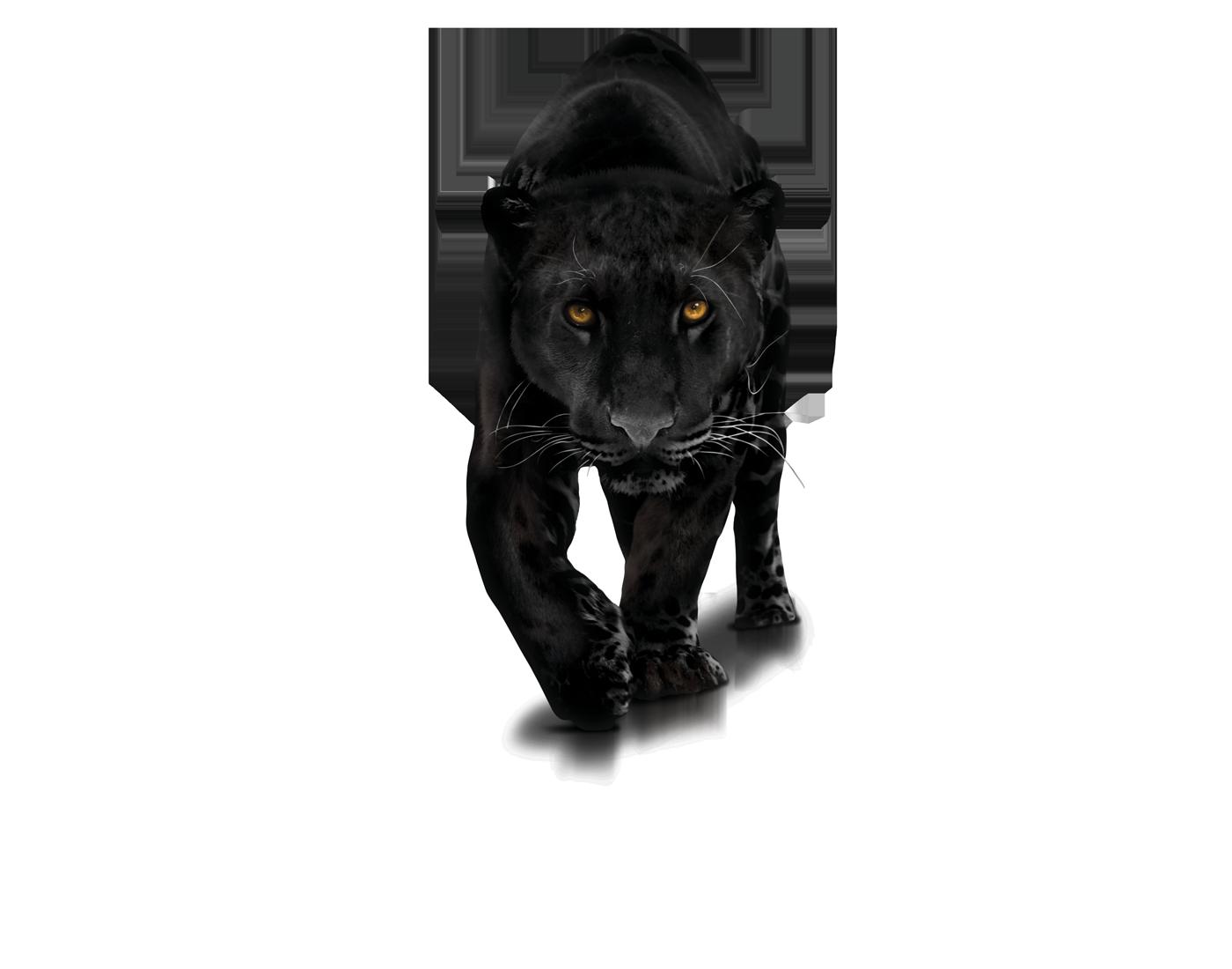 Panther PNG - 8081