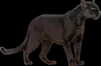 Panther PNG - 8088