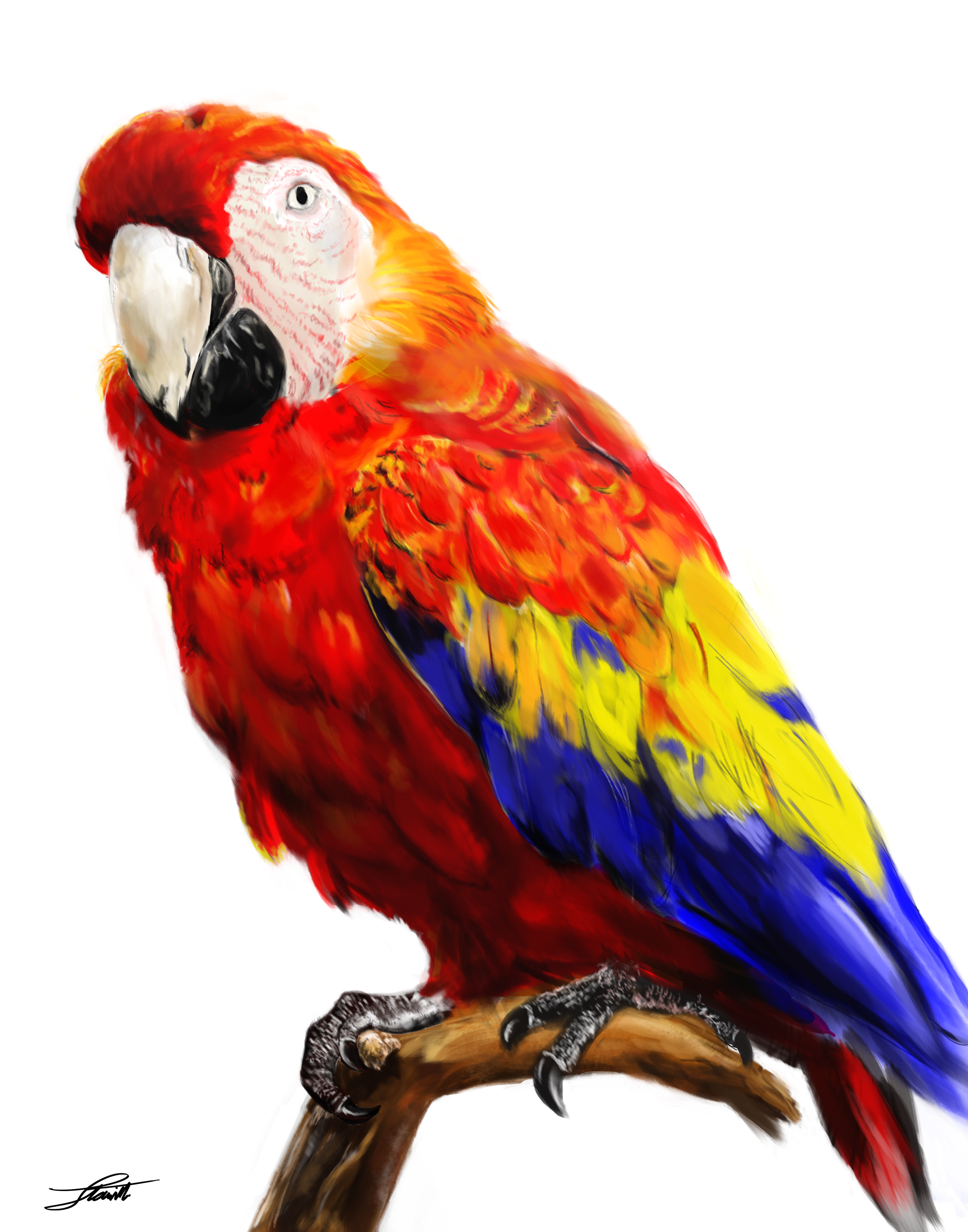 Parrot HD PNG - 93057