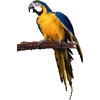 Parrot HD PNG - 93061