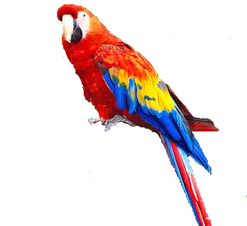 Parrot HD PNG - 93052