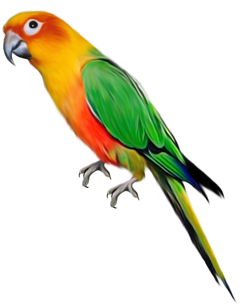 Parrot HD PNG - 93051