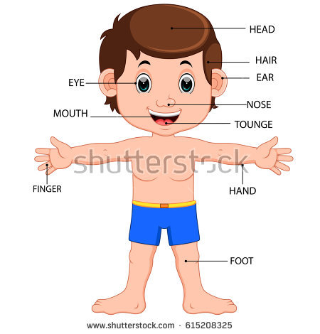 Parts Of The Body For Kids PNG Tagalog - 59293