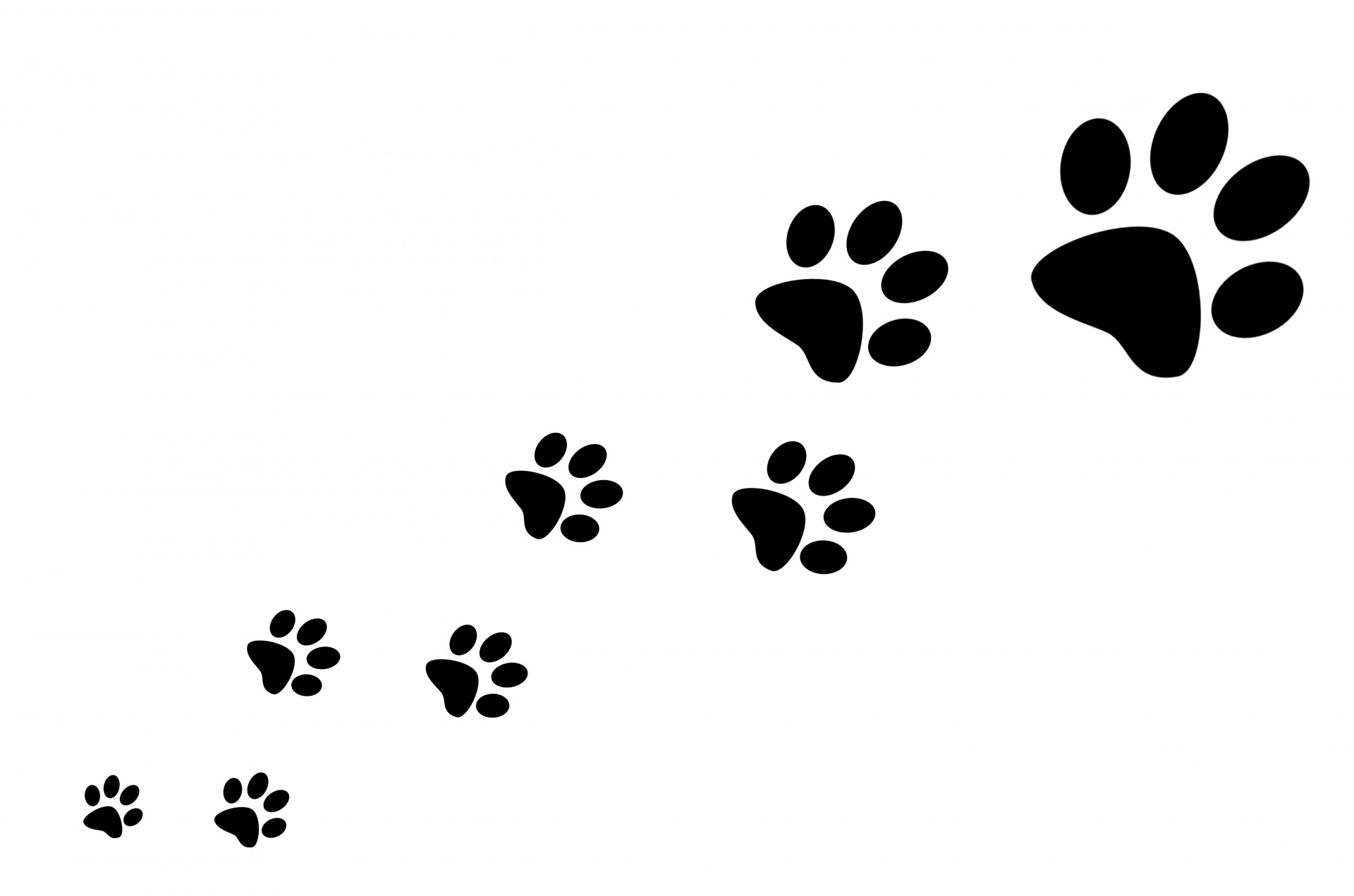 Pictures Of Cat Paw Prints - HD Wallpapers Lovely - Paw Print PNG HD