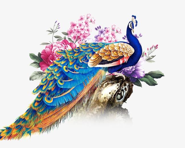 Peacock HD PNG - 95859