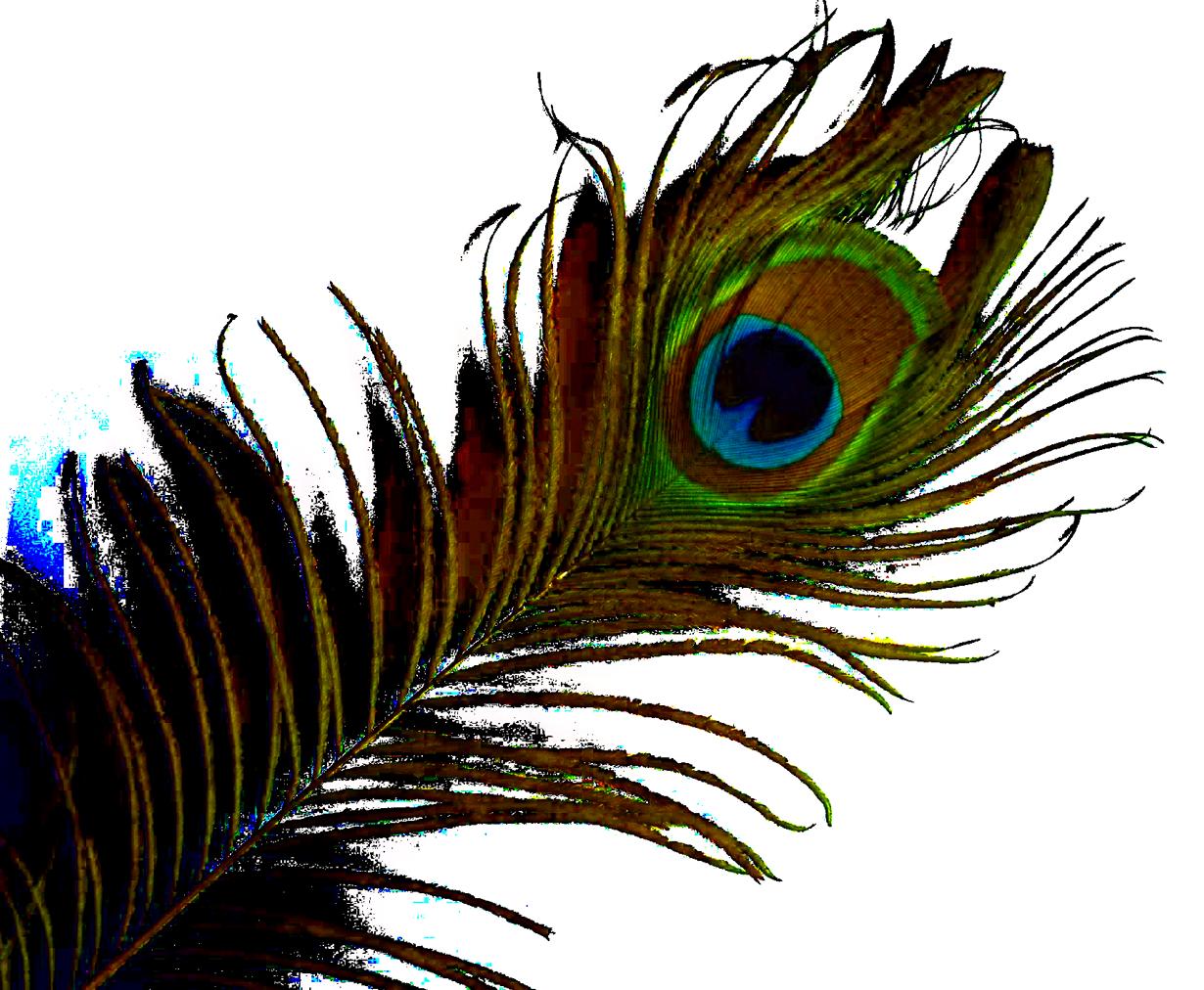 Peacock PNG HD - 122891
