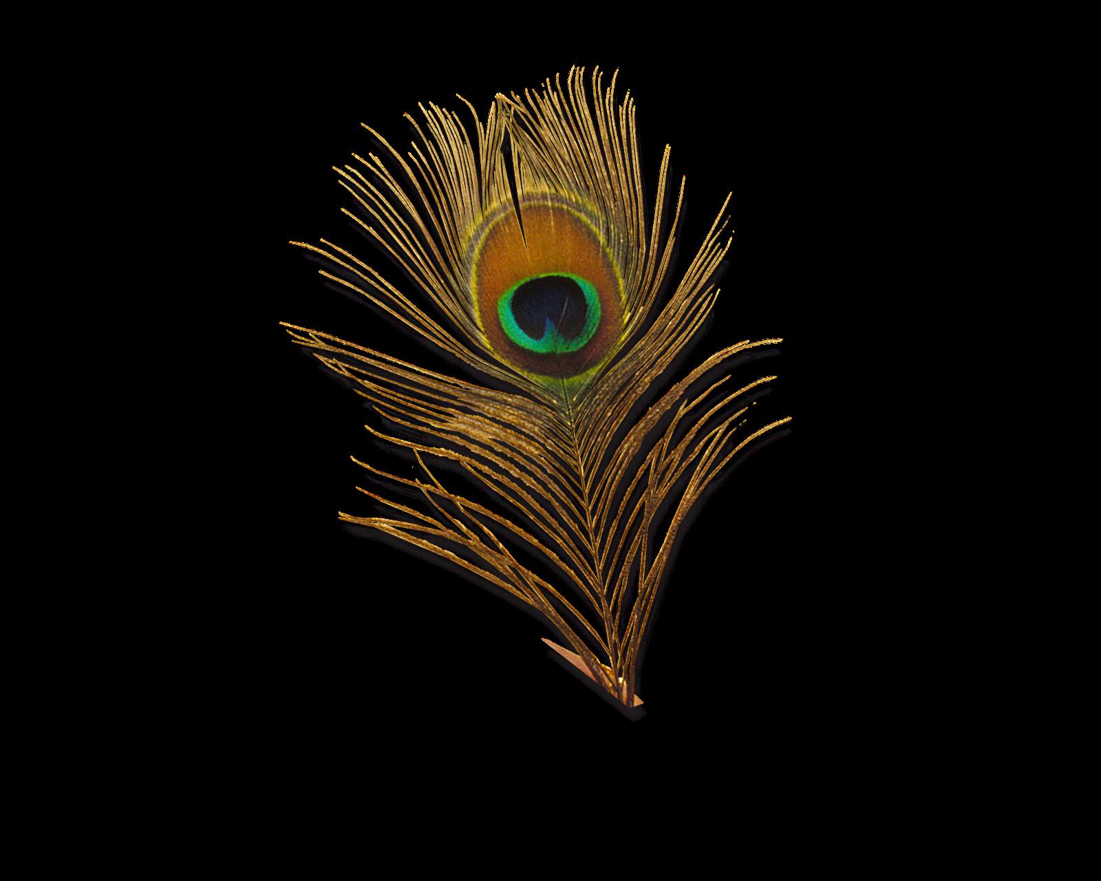 Peacock PNG HD - 122888