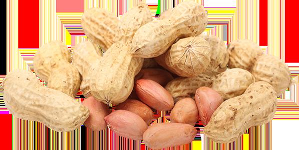 Peanut PNG - 11644