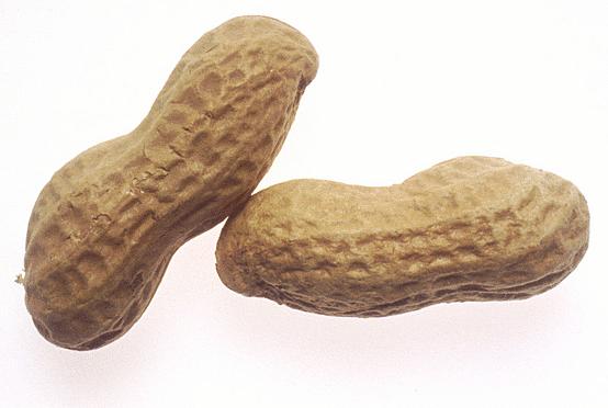 Peanut PNG - 11643