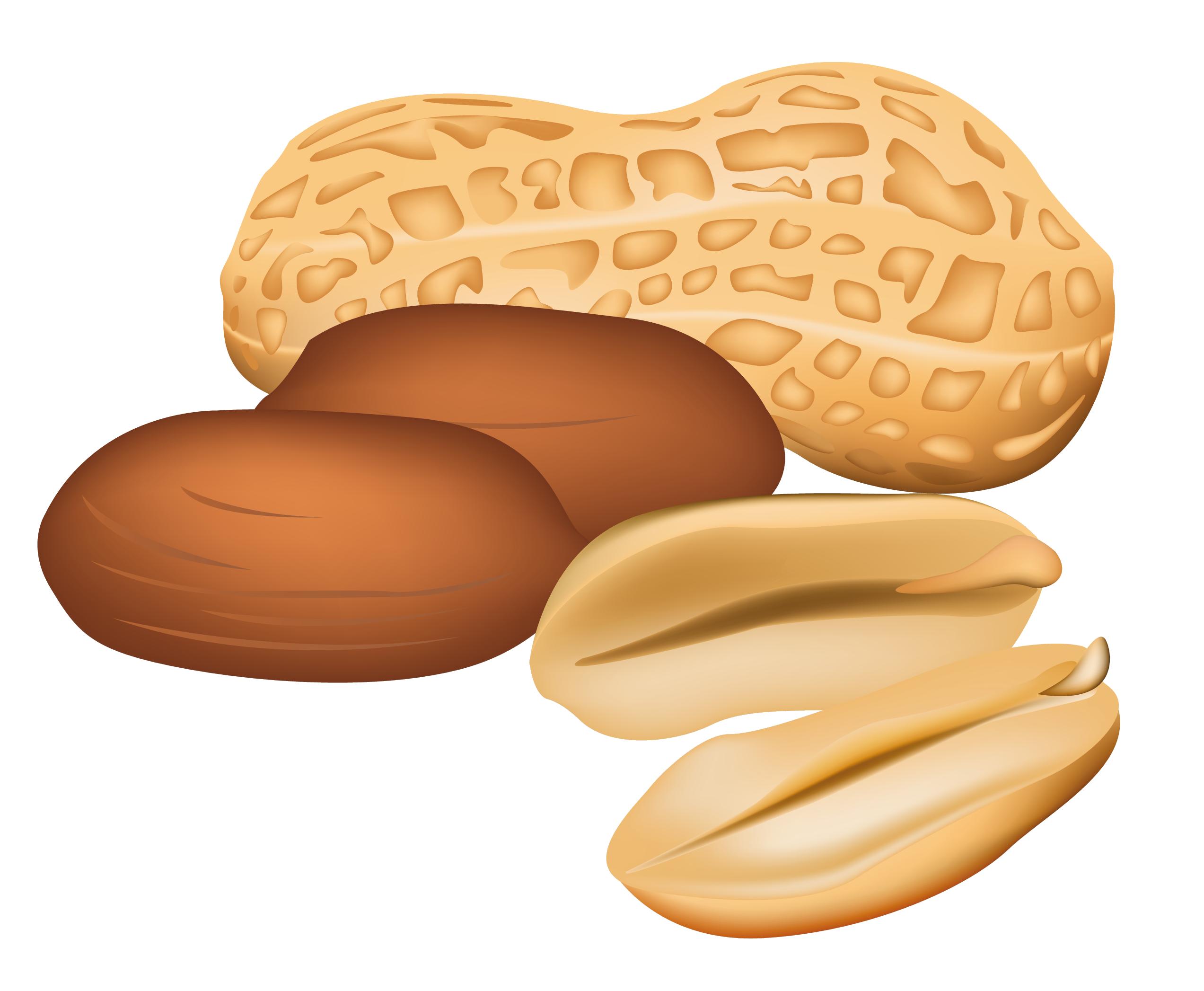 Peanut PNG - 11640