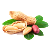 Peanut Png Picture PNG Image - Peanut PNG