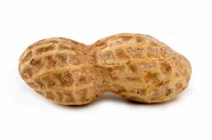 This is National Peanut Month, although Iu0027m not sure why we have a national  peanut month, other than to say it started in 1941 as a week-long  observance, PlusPng.com  - Peanut PNG