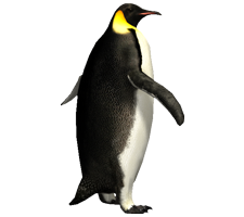 Penguin HD PNG - 92441