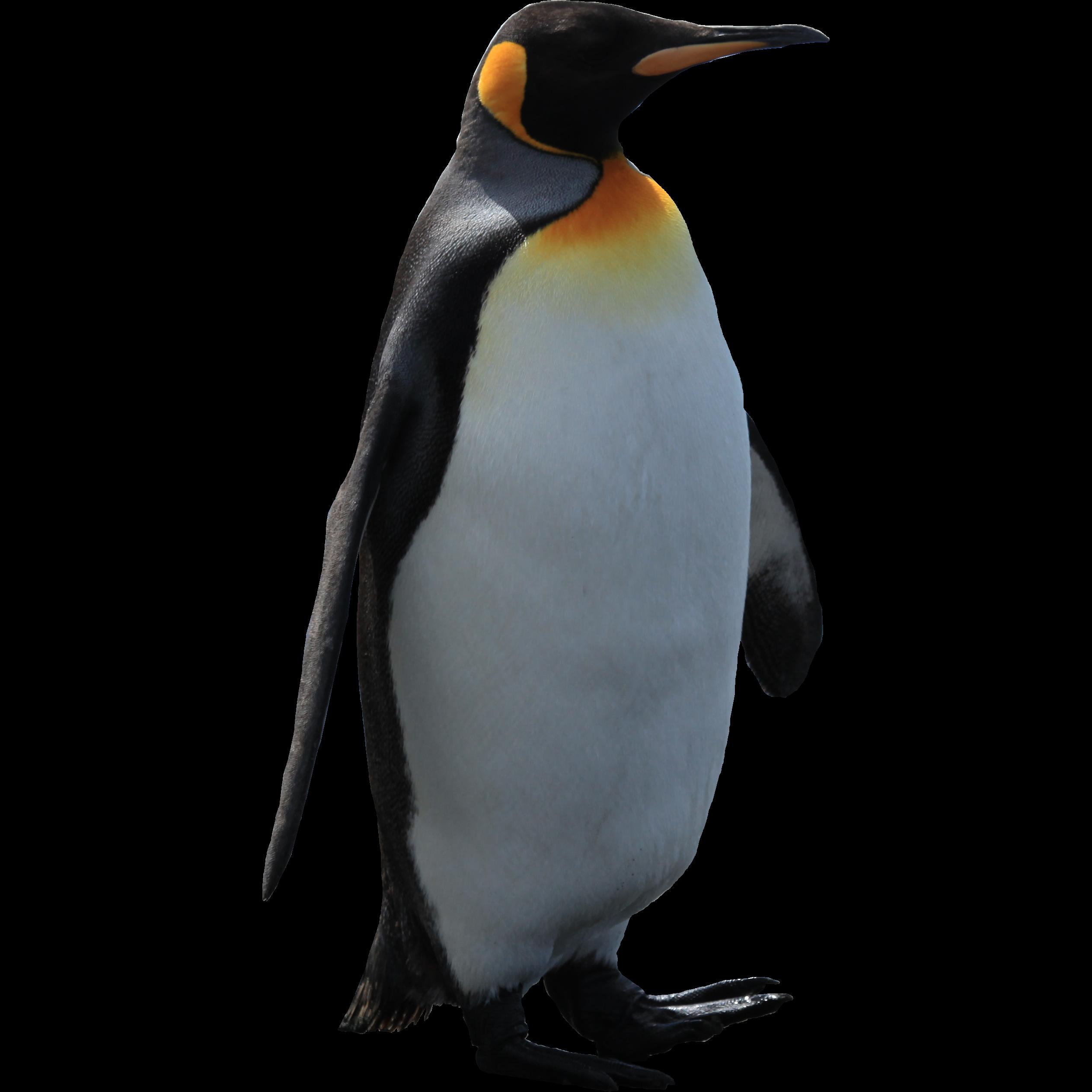 Penguin HD PNG